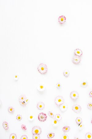 Floral composition with daisy chamomile flower buds on white background. Flat lay, top view florist blog hero header, summer blossom pattern. Standard-Bild - 129781957