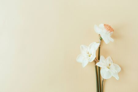 Floral composition with narcissus flower on pastel background. Flat lay, top view florist blog hero header, summer blossom pattern. Standard-Bild - 129781965