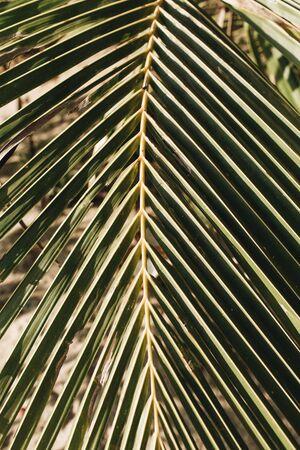 Beautiful tropical coconut palm branch. Minimalistic pattern and print. Summer concept. Standard-Bild - 129781981