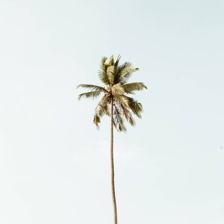 Lonely one tropical exotic coconut palm tree against big blue sky. Neutral background with retro warm colors. Summer and travel concept on Phuket, Thailand.