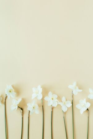 Narcissus flower on pastel background. Flat lay, top view minimal summer floral pattern composition. Standard-Bild - 129781986