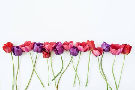 Colorful tulip flowers on white background. Flat lay, top view minimal summer floral pattern composition. Standard-Bild - 129781993