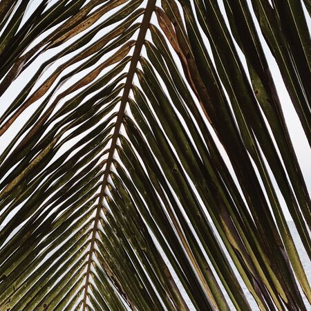 Beautiful tropical coconut palm branch. Minimalistic pattern and background with retro and vintage warm colors. Summer or travel concept. Standard-Bild - 129781995
