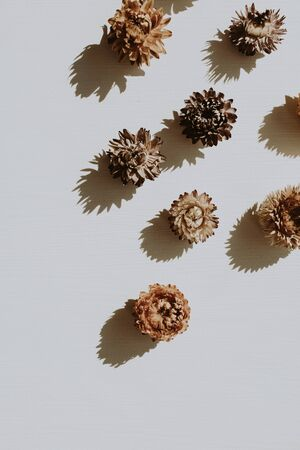 Neutral floral composition with dry flower buds on grey background. Flat lay, top view florist minimal nature concept. Standard-Bild - 129781998
