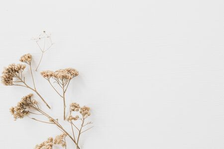 Dry floral branch on white background. Flat lay, top view minimal neutral flower background. Standard-Bild - 129782001