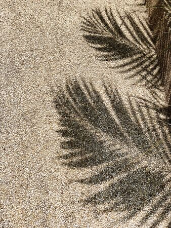 Beautiful shadow of tropical coconut palm branches. Minimalistic pattern and background. Summer or travel concept. Standard-Bild - 129782003
