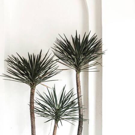 Lonely exotic three palm trees opposite white wall with column and arch. Neutral floral background.