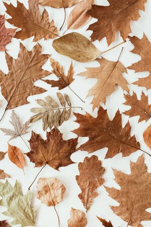Autumn, fall composition. Beautiful background of brown, orange, beige dried leaves. Creative autumn, fall pattern. Flat lay, top view.