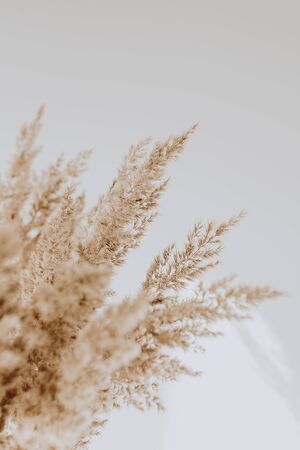 Beige reeds agains white wall. Beautiful background with neutral colors. Minimal, stylish, trend concept. Parisian, french vibes.
