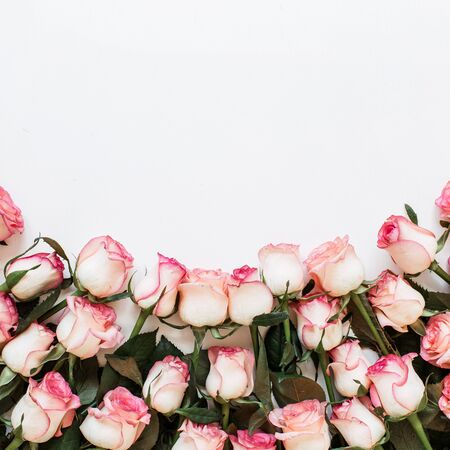Floral composition with many pink rose flowers on white background. Flat lay, top view hero header.