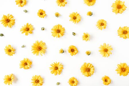 Floral composition with yellow daisy flower buds pattern texture on white background. Flatlay, top view.