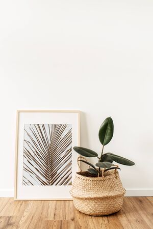 Home plant ficus in rattan pot in front of photo frame with photo of topical palm leaf. Minimal modern interior design concept.