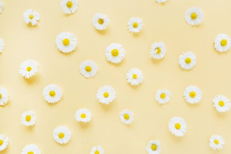 White chamomile daisy flowers pattern on yellow background. Flat lay, top view minimal floral composition.