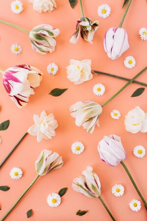 Narcissus, tulip, chamomile daisy flowers pattern on coral peach background. Flat lay, top view minimal floral composition.
