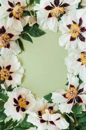 Round frame border of white peonies flowers. Flat lay, top view minimal floral copy space mockup background. Reklamní fotografie
