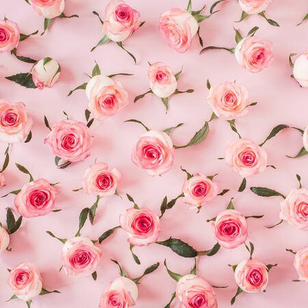 Modello piatto di boccioli di fiori e foglie di rosa rosa su sfondo rosa. Trama floreale vista dall'alto.