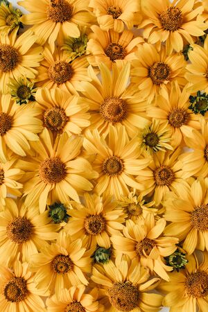 Floral composition with yellow daisy flowers pattern texture background. Flatlay, top view. Zdjęcie Seryjne