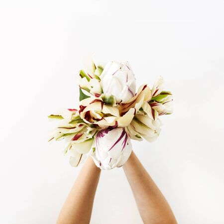Female hands holding tulip flowers bouquet on white background. Flat lay, top view minimal floral composition. Zdjęcie Seryjne