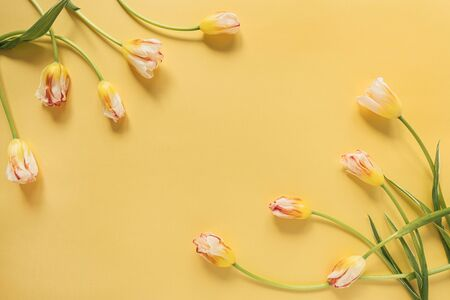 Frame made of yellow tulip flowers on yellow background. Flat lay, top view festive holiday celebration. Copy space mockup