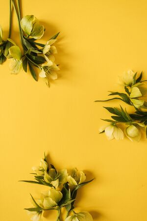 Round frame wreath made of yellow hellebore flowers on yellow background. Flat lay, top view floral blank copy space mockup template 免版税图像
