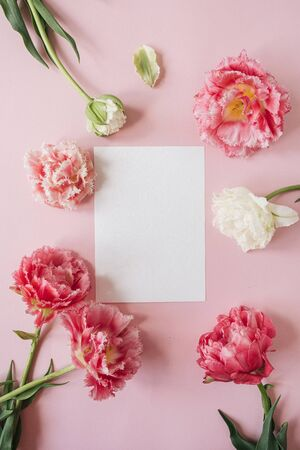Blank paper sheet card in round frame of pink and white peony tulip flowers on pink background. Flat lay, top view floral mockup with empty copy space template