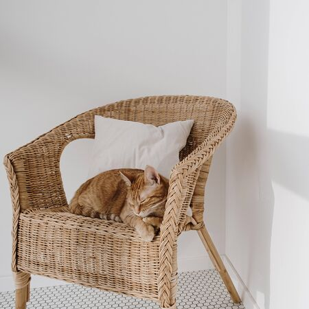Red cat sleeping on rattan chair with pillow. 스톡 콘텐츠 - 149285756