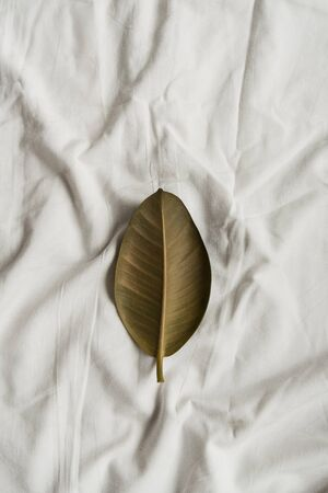 Green leaf on white linen. Flat lay, top view minimalist background. Фото со стока