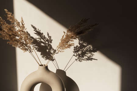 Dry pampas grass / reed in stylish vase. Shadows on the wall. Silhouette in sun light 스톡 콘텐츠 - 151535670
