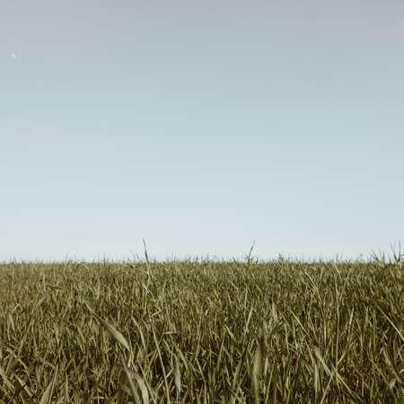 Green grass field and blue sky. Minimal nature landscape 版權商用圖片