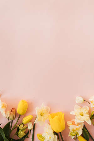 Tulip, narcissus, hellebore flowers on pink background. Flat lay, top view floral festive holiday concept