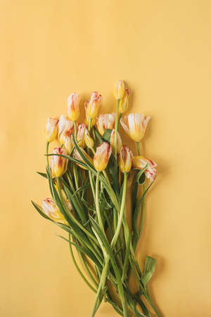 Tulip flowers bouquet on yellow background. Flat lay, top view festive holiday celebration floral concept
