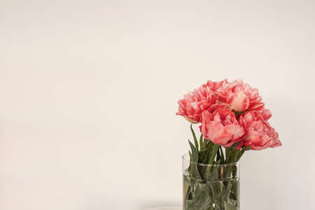 Beautiful pink peony flowers bouquet in glass vase on marble table on white background