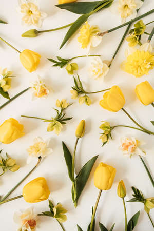 Yellow narcissus and tulip flowers pattern on white background. Flat lay, top view floral festive holiday texture 版權商用圖片