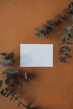 Blank paper sheet card with empty copy space, dry eucalyptus branch on deep red background. Flat lay, top view business mock up template 版權商用圖片