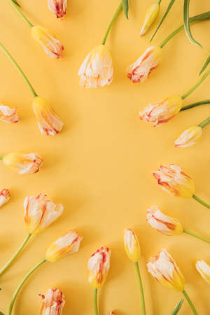 Yellow tulip flowers on yellow background. Holiday celebration concept with mockup copy space. Flat lay, top view 版權商用圖片