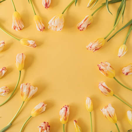 Round frame made of yellow tulip flowers on yellow background. Flat lay, top view festive holiday celebration. Copy space mockup 版權商用圖片