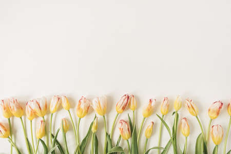 Colorful tulip flowers on white background. Flat lay, top view floral holiday celebration composition. Wedding, Valentine's Day, Mothers Day.