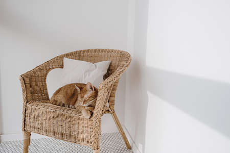 Red cat sleeping on rattan chair with pillow.