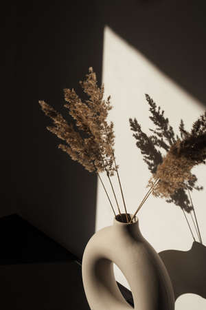 Dry pampas grass / reed stalks bouquet in stylish round vase. Shadows on the wall. Silhouette in sunlight. 스톡 콘텐츠 - 154018312