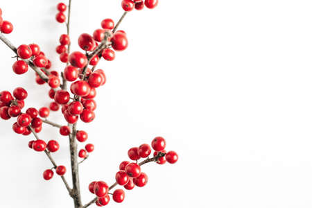 Minimal seasonal composition. Pattern of branch with red berries on isolated white background. Christmas holidays, winter concept. Copy space, top view.