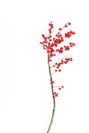 Minimal seasonal composition. Pattern of branch with red berries on isolated white background. Christmas holidays, winter concept. Copy space, flat lay.