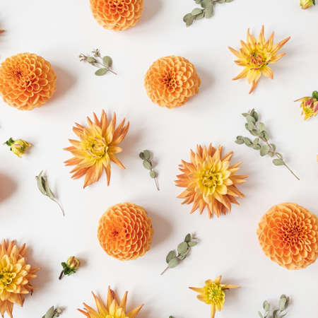 Beautiful orange dahlia flower buds and eucalyptus branches pattern on white background. Flat lay, top view minimalistic still life creative floral texture.