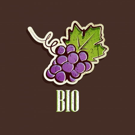 vintage illustration with grapes Vector