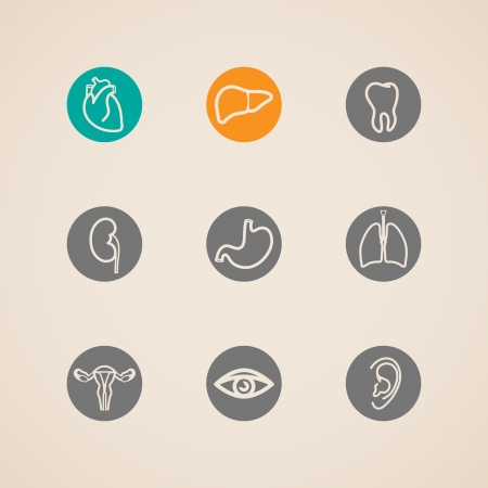 respiratory apparatus: Human organ icons set  Illustration