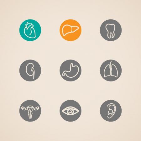 organi interni: Icone di organi umani impostati