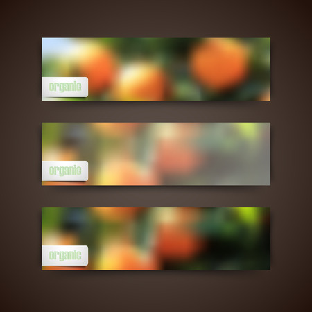 grove: Set of banners with blurred background of orange grove and organic food label, vector design Illustration