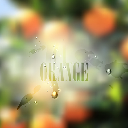 fresh blurred food background with oranges, water drops and splashes  vector illustration Vector