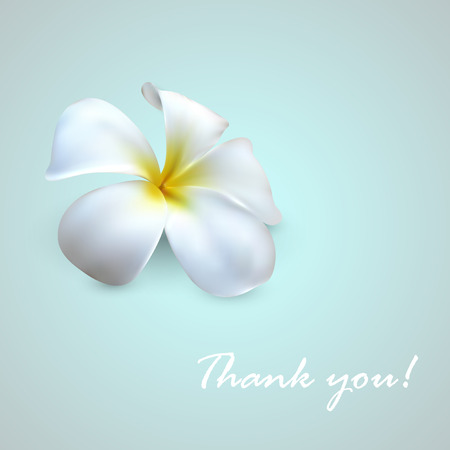 vector background with frangipani flower  Thank you