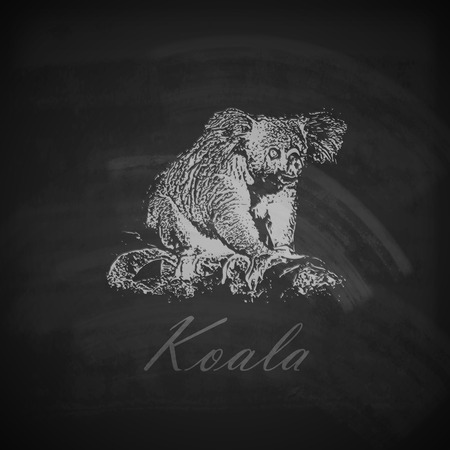 vector illustration of a chalk koala bear on the blackboard texture Vector