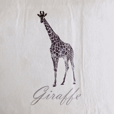 vector vintage illustration of a giraffe on the old wrinkled paper texture